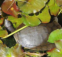 Turtle Greenery by ScenerybyDesign