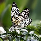 Nymph Butterfly  by Pixie Copley LRPS