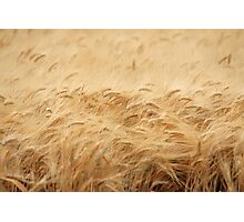 The Wheat Field Photographic Print