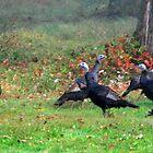 Wild Turkeys Feeding Along The Forest by Geno Rugh