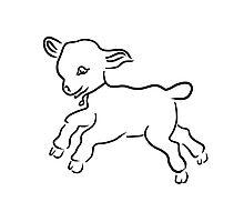 lamb running Photographic Print
