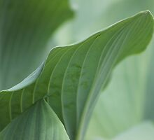 Green Leaves by Gilda Axelrod