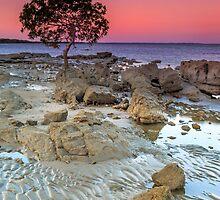 The Little Mangrove Tree - Brisbane Qld Australia by Beth  Wode