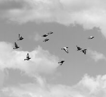 Untitled - flock of birds by Amber Redfield