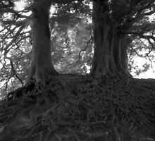 Wizard Trees, Avebury England c1999 by visualsteno