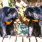 Bears of Laos by indiafrank