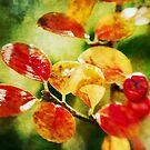 Autumn by Kasia-D