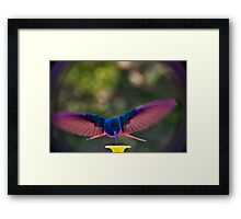 Spread Eagle Formation Framed Print