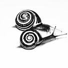 Snail Duo by Laurie Minor