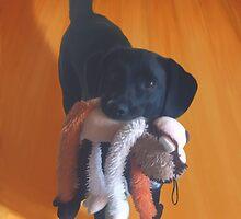 Nemo the Dog by Allyson Hicks