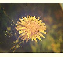 Tiny Yellow Sun by Jessica Reilly
