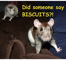 did someone say biscuits? Photographic Print