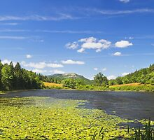 Lily Pads on Long Pond Acadia National Park by KWJphotoart