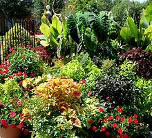 Container Garden     ^ by ctheworld