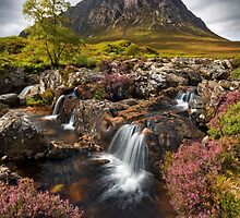 Buachaille Etive Mor and Heather. Glencoe. Highlands of Scotland. by photosecosse /barbara jones