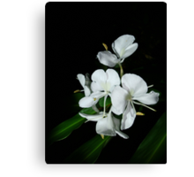 Ginger Lilies at Night Canvas Print