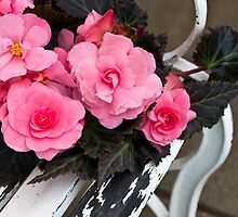 Last Of Summer  -  Begonias On Bench  by Sandra Foster