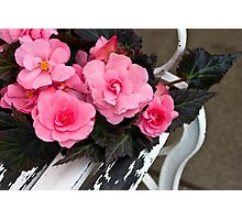 Last Of Summer  -  Begonias On Bench  Photographic Print