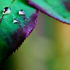 Water Droplets by TB-Photography-
