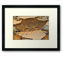 Big Blue Claw Crab, As Is Framed Print