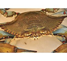Big Blue Claw Crab, As Is Photographic Print