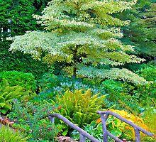 Tree & Walkway, Butchart Gardens, BC by Thomas Barber