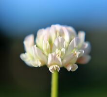 The Last of the Clover? by Kathleen Daley