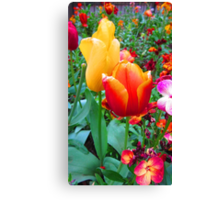 SOLD - TWO TULIPS Canvas Print