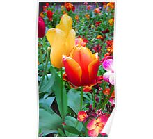 SOLD - TWO TULIPS Poster