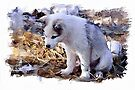 Sled dog Pup - watercolour by PhotosByHealy