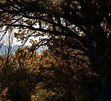 Una strada di campagna, Monticchiello, Toscana, Italia by Andrew Jones