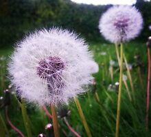 Dandelion Puff by NellySells