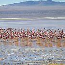 Flamingo city by DianaC