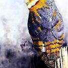 Barn Owl by Terry Bailey