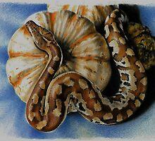 Rebecca Koller reptile art by Rebecca Koller