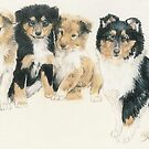 Collie Puppies by BarbBarcikKeith