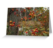 Autumn Bittersweet Greeting Card