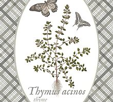 Butterflies and Thyme by historicnature