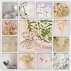 Photo Collage By Sandra Foster  by Sandra Foster
