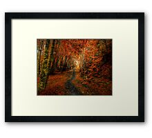 Trails In The Woods ~ Old Santiam Wagon Road ~ Framed Print