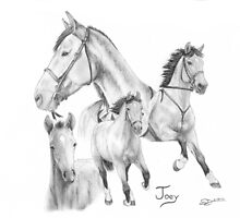 """""""Life of Joey"""" War Horse by SD 2010 Photography & Equine Art Creations"""