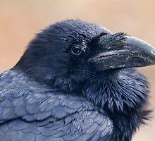 Raven  by chris2766