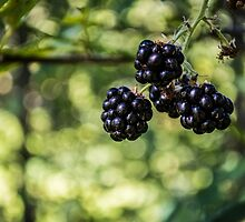 Berry Bokeh by SD 2010 Photography & Equine Art Creations