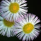 Wild Flowers by nastruck