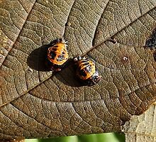 Time for a change - ladybird larvae hatching by Rivendell7