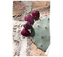 cactus in bloom Poster
