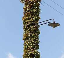 lamppost wrapped in ivy by spetenfia
