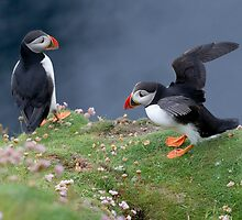 Pair of Puffins by ChrisMillsPhoto