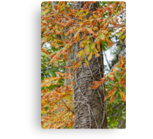 tree in autumn Canvas Print
