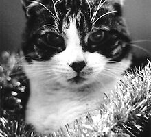 Christmas Cat by Flo Smith